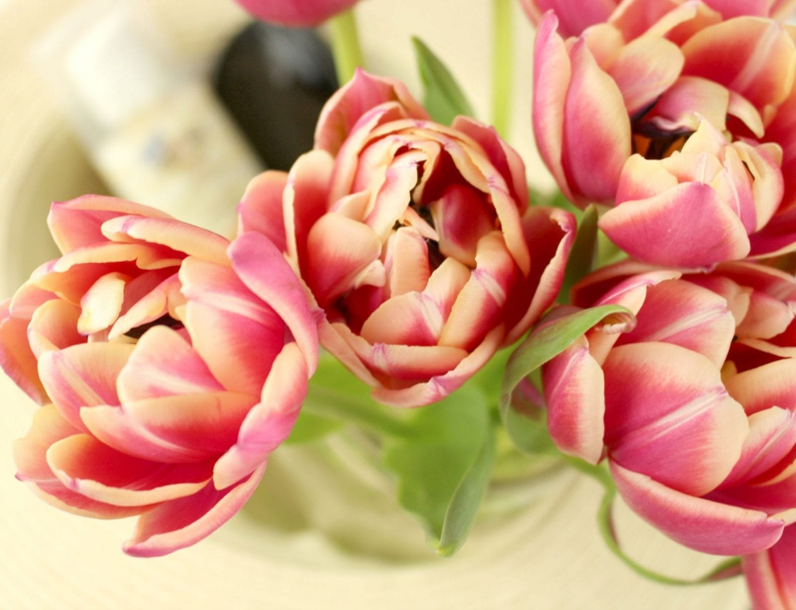 These are gorgeous tulips surrounding the Hawaiian Tropic® Silk Hydration™